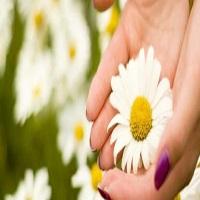 خواص 6 گل برای پوست و مو